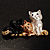 'Adorable Kittens' Fashion Brooch (Gold Tone) - view 4